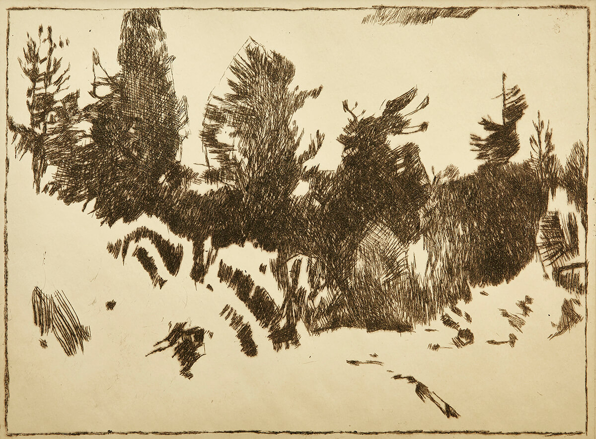 gallery-image-Staré stromy